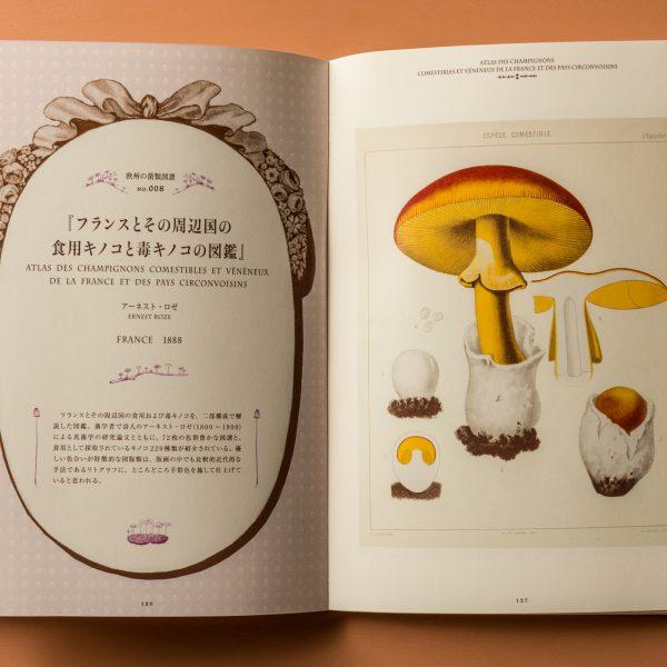 Mushroom Botanical Art