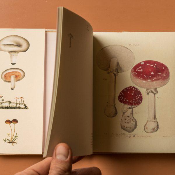 Postcard Book of Mushrooms