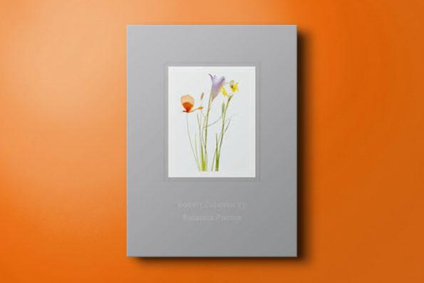 Polaroid Poems